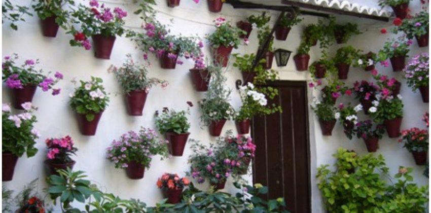 Flores, mayo, Córdoba
