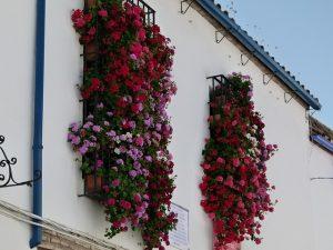 rejas-con-flores