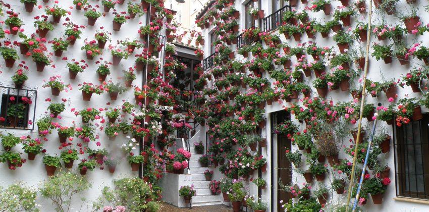 Los patios de Córdoba: arte y tradición