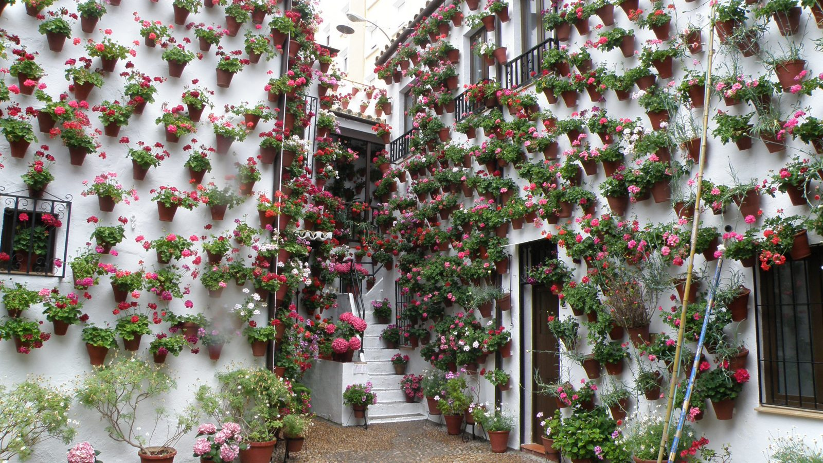 Los patios de c rdoba arte y tradici n festivales del sur - Inmobiliarias en cordoba espana ...